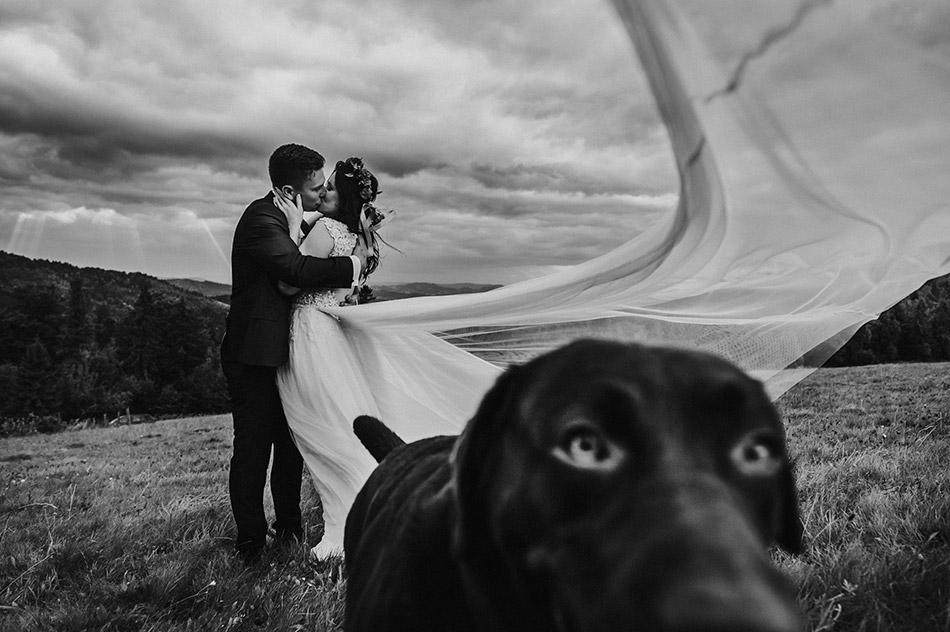Ciekawa i inspirująca sesja ślubna, plenerowa w górach. Zdjęcie ślubne z psem